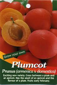 Plum PLUMCOT