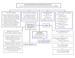 Medical Center Organizational Chart Organization Chart