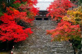 11月 紅葉の神護寺 京都の秋景色[10738002151]の写真素材・イラスト素材|アマナイメージズ