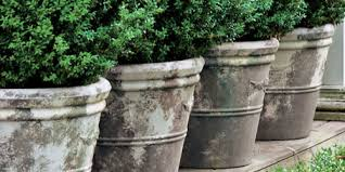to plant a shrub or tree in a container
