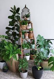Urban Jungle Bloggers: My Plant Gang by <a href=