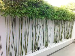 Small Picture Bambou en pot brise vue naturel et dco sur la terrasse Bamboo