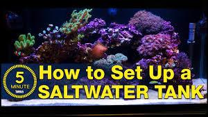 Saltwater Aquarium Lighting Guide Saltwater Aquarium Setup A Simple Easy Guide In 5 Minute Steps