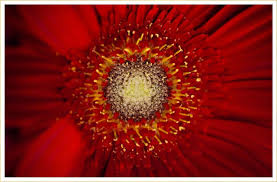 40 types of red flowers ftd com