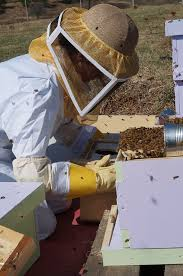 Risultati immagini per apicultura