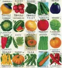 garden seed. NON-GMO Vegetable Seeds Garden Seed