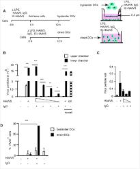 Humoral Immunity Flow Chart Humoral Immune Response To Adenovirus Induce Tolerogenic