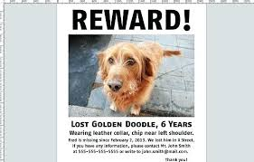Lost Cat Flyer Found Dog Template