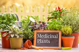 it is the most lovely return gift idea which one can e across you can gift various useful plants like tulsi oregano rosemary etc