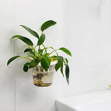 office flower pots. Item 1 Strong Creative Suction Cup Water Flower Pot Office Plants Indoor Wall Hang -Strong Pots T