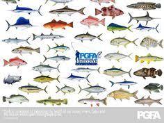 9 Best Fish Pics Charts Etc Images Fish Fish Chart