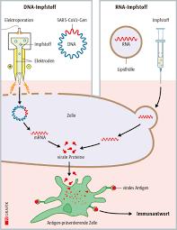 SARS-CoV-2-Impfstoffe Teil 3: Impfen mit RNA oder DNA | PZ –  Pharmazeutische Zeitung