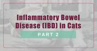 Cerenia Dosing Chart Cats Inflammatory Bowel Disease Ibd In Cats Part 2 Boulder