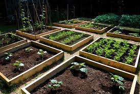 Small Picture Raised vegetable garden design