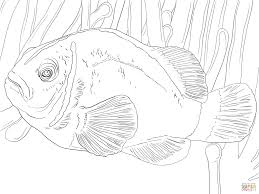 Small Picture Clown Fish Coloring Pages Coloring Pages