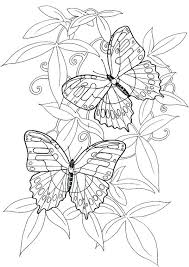 Free Coloring Pages Butterfly Coloring Page Of Butterfly Coloring