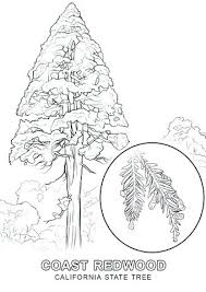 California Coloring Pages State Tree Coloring Page California