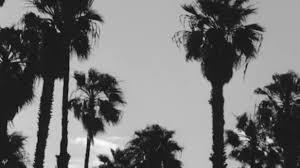 Contemporary Palm Trees Tumblr Black And White Palmtreeprincess S To Ideas
