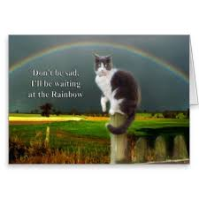 Loss Of A Cat Quotes Amazing Cats For Pet Loss Quotes On QuotesTopics