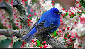 Desktop Background Birds - http ...