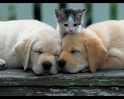 puppies and kittens sleeping. Beautiful Puppies Cute Adorable Kitten And Sleeping Puppies Kittens I