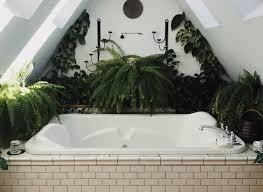 Pflanzen Im Badezimmer Impex Blog