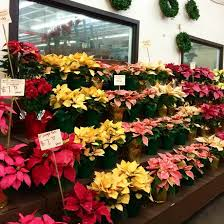 la flower district holiday hours