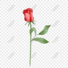 beautiful red rose flower ilration