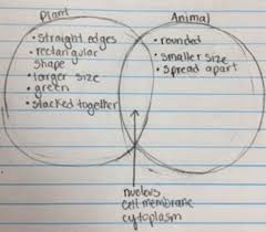 Venn Diagram Plant Cell And Animal Cell Best Plant And Animal Cell Venn Diagram Vs Cells For Educational