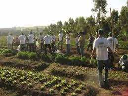 Resultado de imagem para assentamentos de rurícolas com irrigação