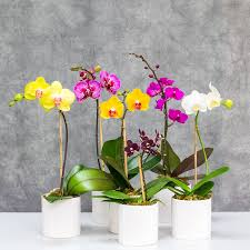 mini orchid in white ceramic
