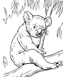 Small Picture Koala Bear on Eucalyptus Tree Coloring Page Color Luna