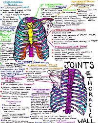 Pinterest Medical 24 Best Medicine Images On Pinterest Natural Health Herbs And 3