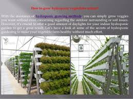 indoor hydroponic vegetable garden. Indoor Hydroponic Vegetable Garden Stagger Secrets To Grow Vegetables Home Interior 5 S