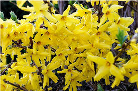 bright yellow flowers names bright small yellow flowers of wallpaper gallery bright yellow flowers names