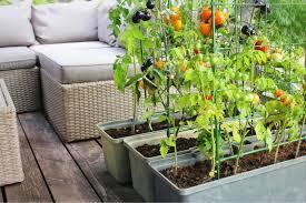vertical vegetable garden how to grow