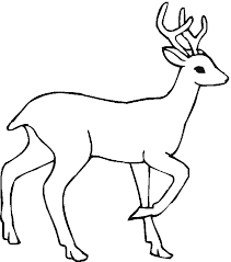 Coloring Pages Forest Animals Free Coloring Pages Of Deciduous Forest Animals 771