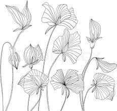 stock vector of sweet pea flowers