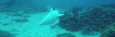 real underwater world. Unique World Engineers From The Massachusetts Institute Of Technology Created Robotic  Fish With A Video Camera That Moves Like Real Fish Developers Tested Device  Throughout Real Underwater World