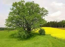 Resultado de imagem para parabola do grão de mostarda