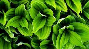 Green Leaf Wallpaper HD (54+ best Green ...