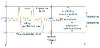 Volume And Capacity Chart Lung Volumes And Lung Capacity An Overview