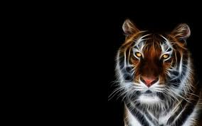 High Definition Pictures Tiger Wallpapers Best Wallpapers
