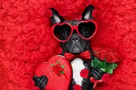 Petals Bow tie eyeglasses Animals ...