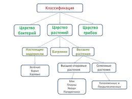 Классификация растений царство Классификация растений