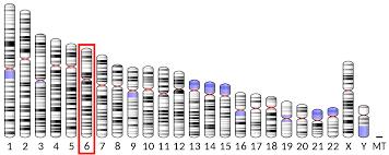 Prolactin Wikipedia