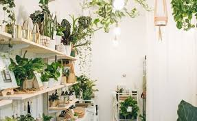 decorate your home with indoor plants