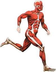 This small muscle is located at the top of the shoulder and helps raise the arm away from the body. Major Muscle Groups Bodybuilding Wizard
