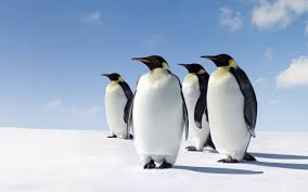 penguin desktop wallpaper. Modren Penguin Penguins Desktop Background And Penguin Wallpaper U