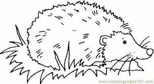 Small Picture Hedgehog Coloring Page Free Hedgehog Coloring Pages